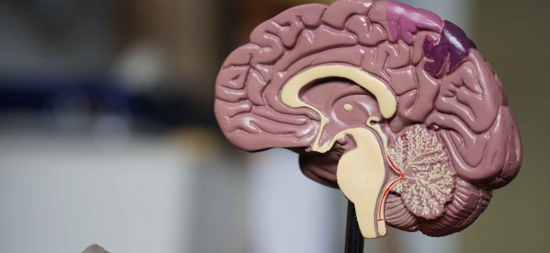 Grow Your Gym Using Neuroscience